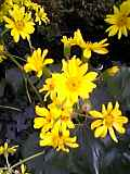 flower_yellow